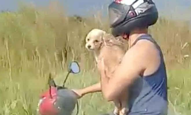 Irresponsabilidade: Homem é flagrado transportando cachorro em motocicleta na TO-222