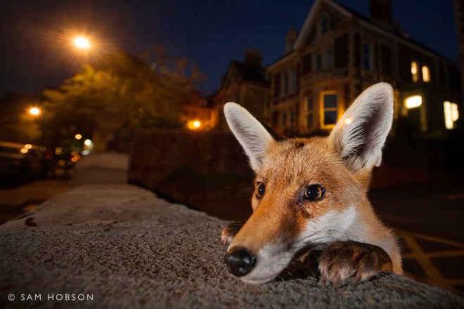 Fotógrafo capta imagens incríveis de animais selvagens em cidades