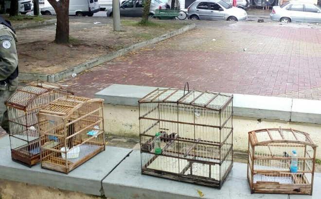 Inspetoria de Proteção Ambiental da Guarda Municipal apreende animais silvestres nas feiras livres de Fortaleza, CE
