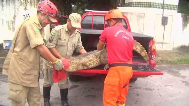 Cetra do Ibama resgata mais de 4.200 animais silvestres neste ano no Ceará
