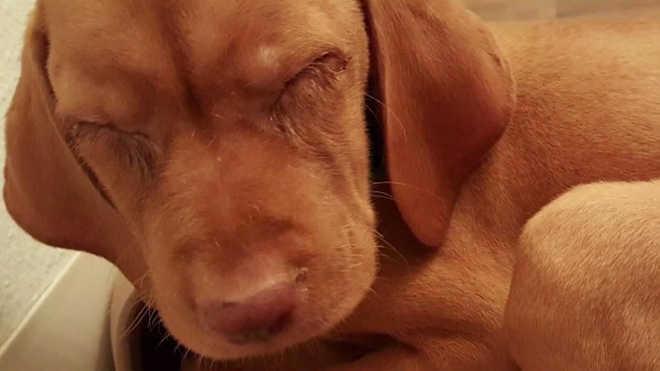 Acusações de filhotes e cães vivendo em condições desumanas em lojas de animais em San Diego, EUA