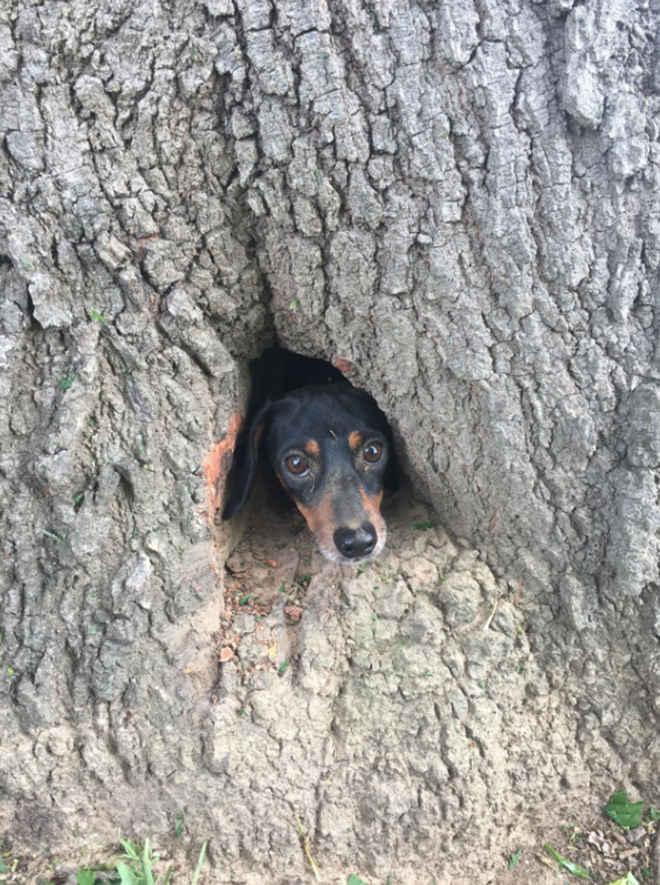 Bombeiros salvam cachorro que ficou preso em árvore nos EUA