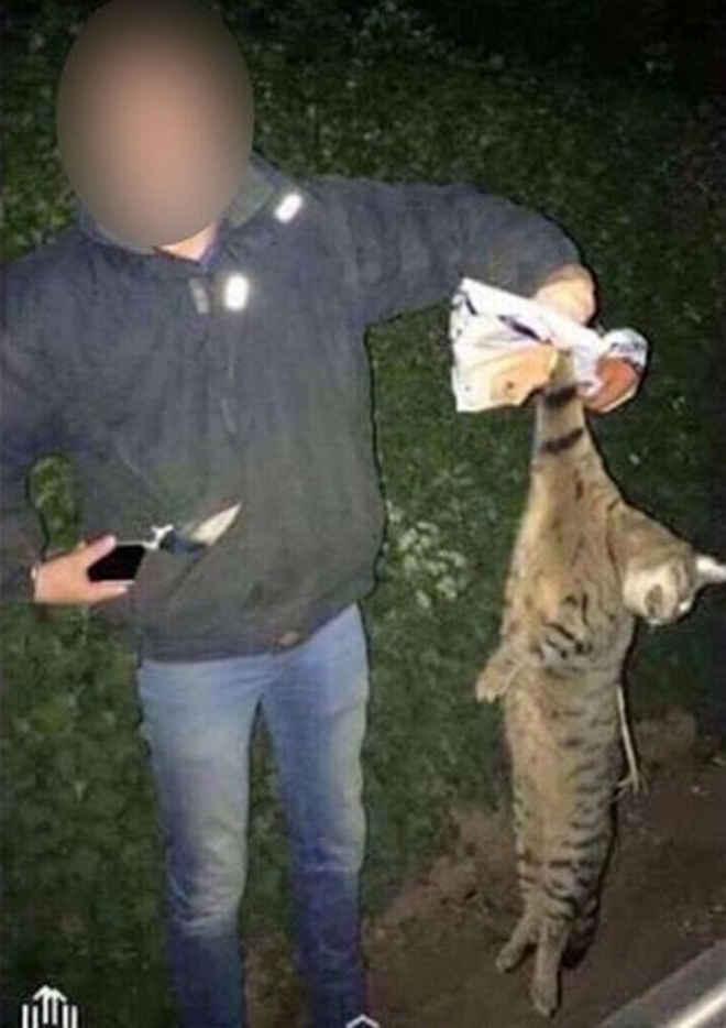 Absurdo! Alunos de veterinária competem para ver quem mata animal maior