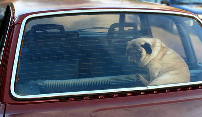 Homem deixa ovo no carro para provar que você nunca deve deixar seu cachorro lá dentro