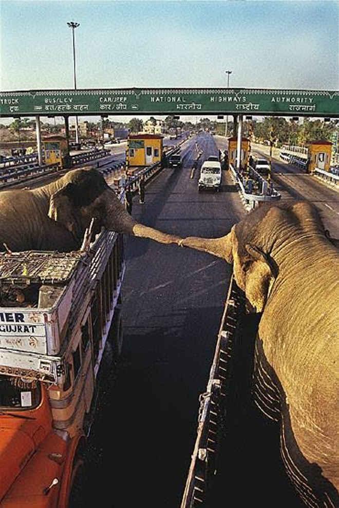 A comovente despedida de dois elefantes