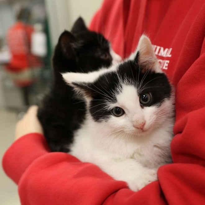 Clínica veterinária busca profissionais para abraçar gatinhos o dia todo