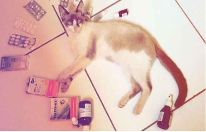 Uso de medicamento humano causa intoxicação de animais domésticos em Imperatriz, MA