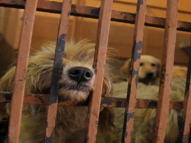 Centros de zoonoses matam cães saudáveis em troca de dinheiro na Cidade do México