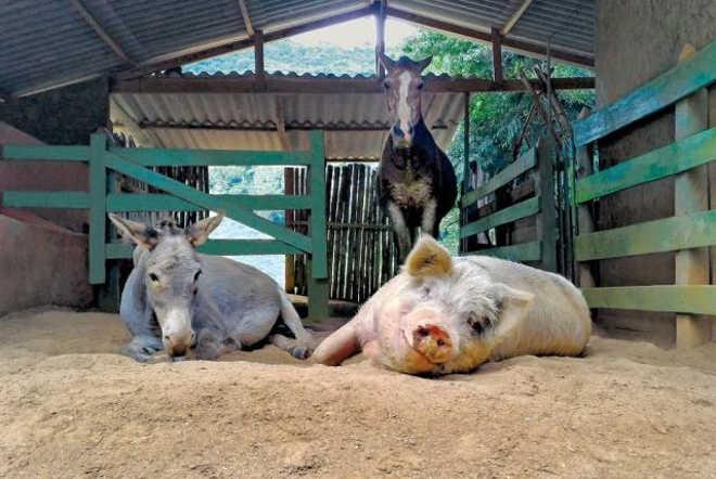 Livro conta história de grupo que se dedica a transformar nossa relação com os animais