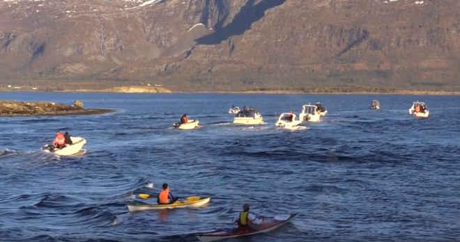 Comunidade se reúne para salvar cinco orcas selvagens que estavam presas em águas rasas por 19 dias