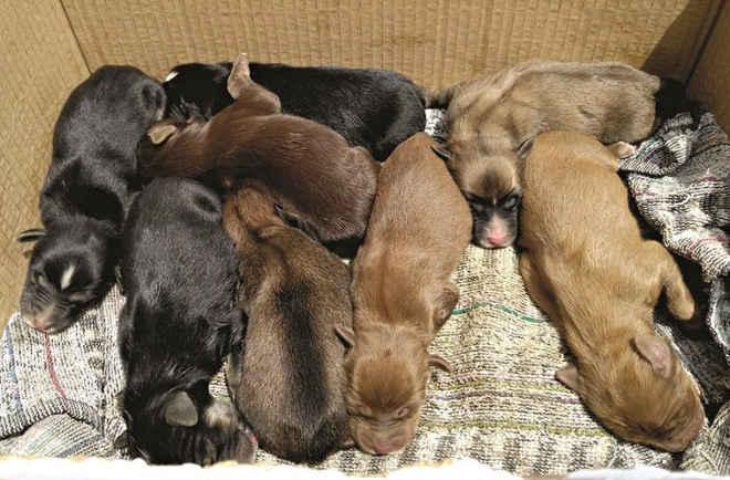 Encontram cães bebés no lixo em Vila Nova de Famalicão, Portugal