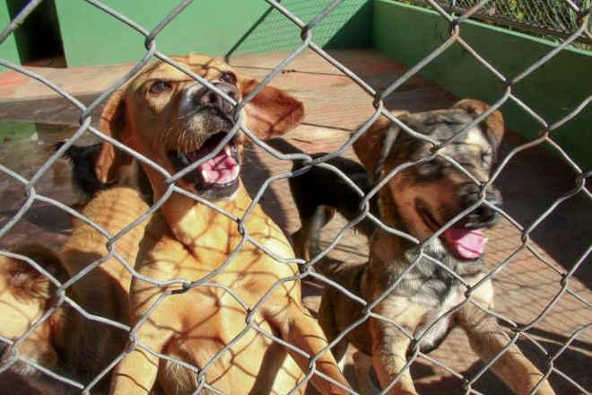 Câmara aprova projeto de castração gratuita aos animais de rua em Arapongas, PR