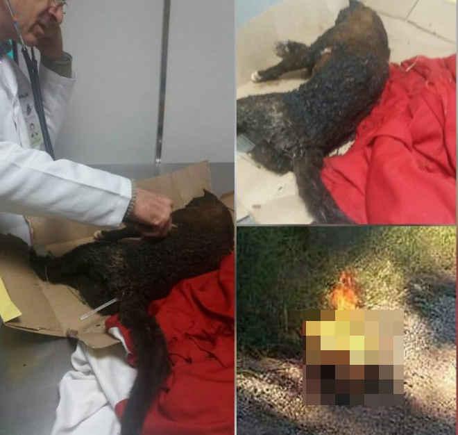 Gato morre após ser queimado vivo e caso gera revolta nas redes sociais; Força Animal pede ajuda