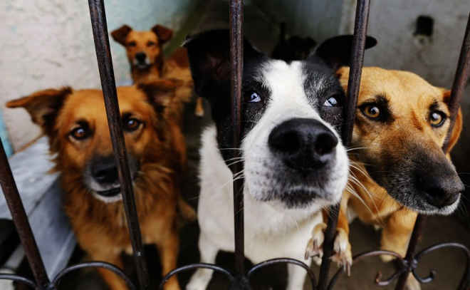 Inaugurado há uma semana, centro de animais em risco de Curitiba (PR) já está no limite! Adote!