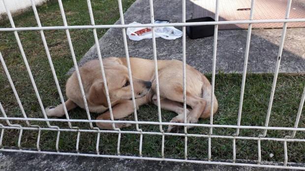 Cão é abandonado em frente à sede da Polícia Rodoviária Federal em Curitiba, PR
