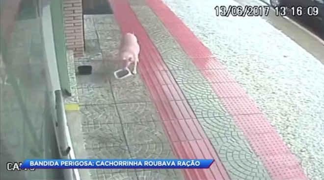 """Cachorrinha é flagrada """"roubando"""" ração para dar a outros cachorros; vídeo"""