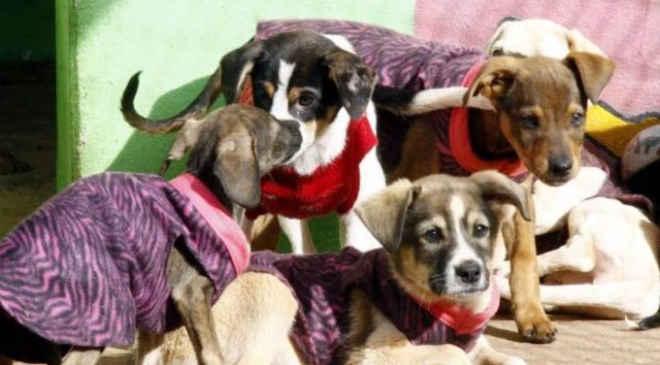 Cães receberão agasalhos para se protegerem do frio em Umuarama, PR