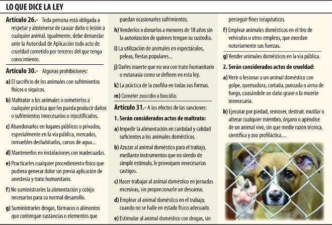 Maus-tratos contra animais aumenta e a lei de proteção é letra morta no Paraguai