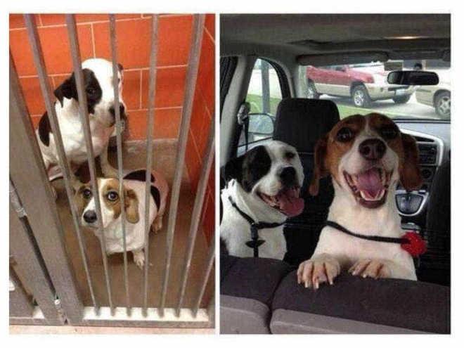 O antes e depois de animais abandonados que ganham um tutor (e amor)