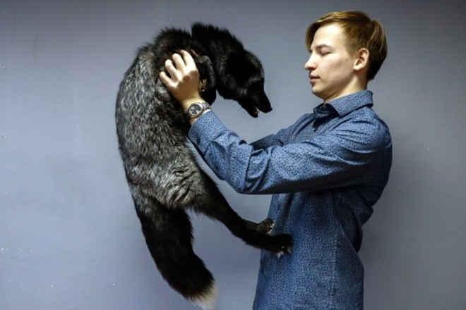 Projeto de lei proíbe ursos e leões como animais de estimação na Rússia