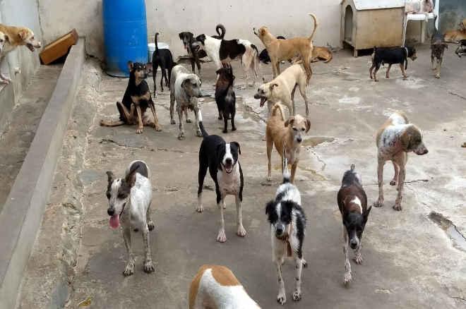 ONG precisa de auxílio para manter proteção de animais em Aracaju, SE