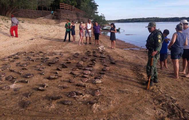 Homens são flagrados com 369 tartarugas e levam multa de quase R$ 2 milhões; vídeo