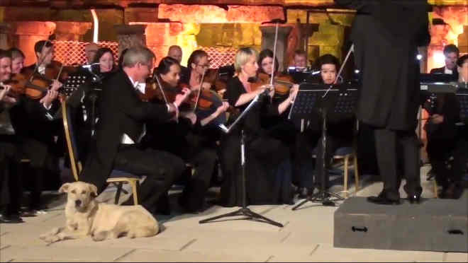 Cachorro invade palco e se junta a orquestra; veja