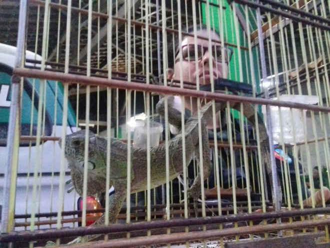 BPA aprende pássaros e animais silvestres em feiras de Maribondo e Arapiraca, AL