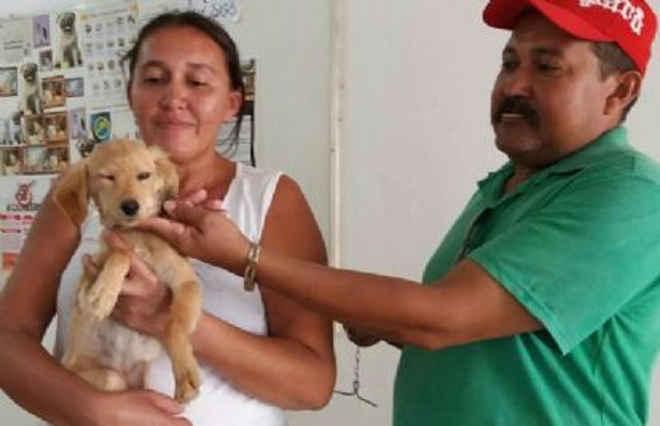 Zoonoses promove adoção de animais no Centro de Juazeiro do Norte, CE