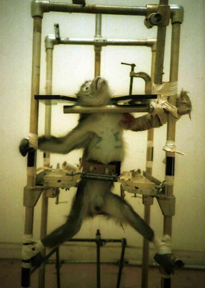 Projeto que proíbe testes em animais está pronto para ser votado em Plenário no Senado