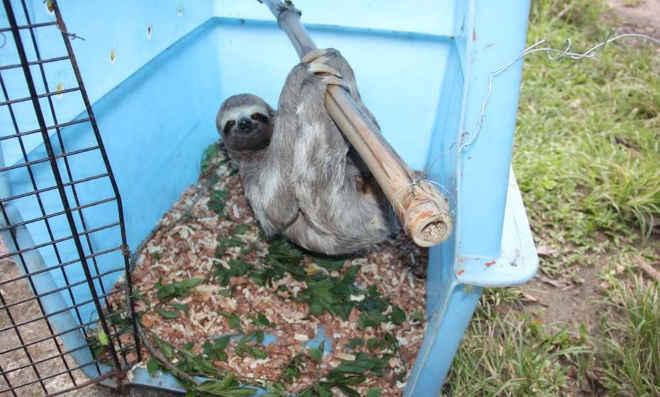 Pernambuco recebe animais silvestres resgatados no Ceará