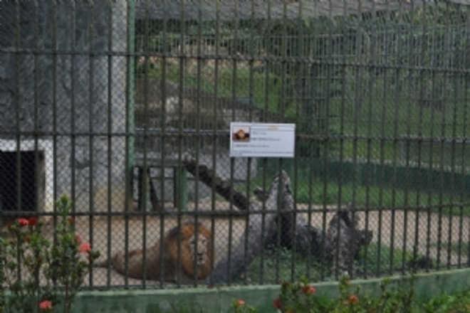 MP quer centro para recuperação de animais silvestres em Sergipe