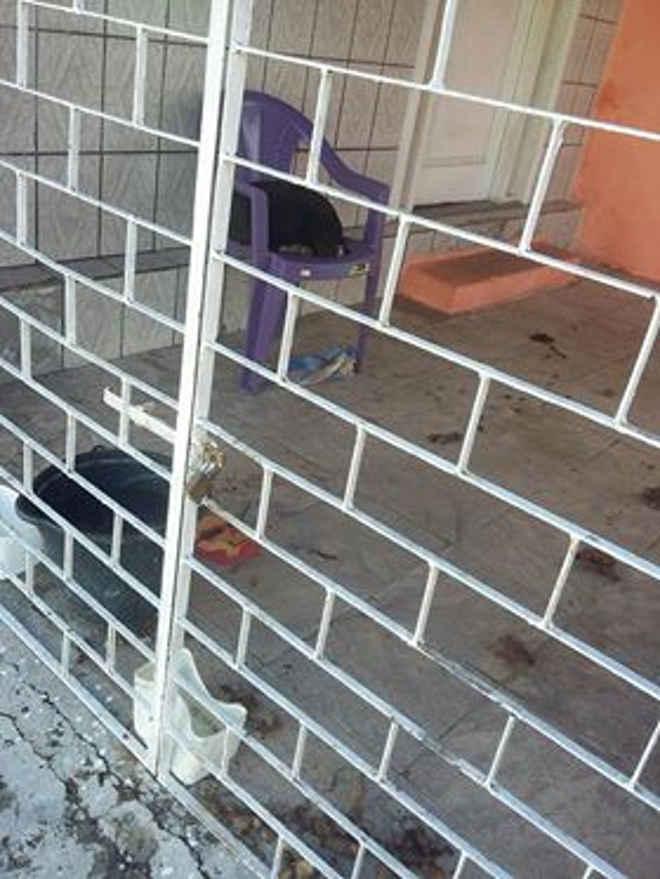 Guarda ambiental socorre cadela que estava abandonada sem água e comida, em Socorro, SE