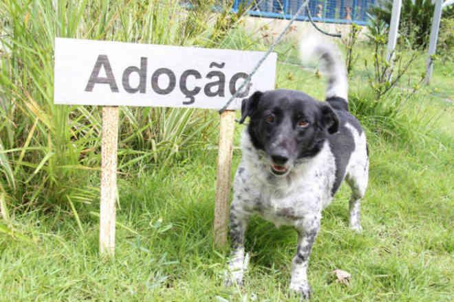 Em Osasco (SP), projeto estabelece multa de quase R$ 600 para quem abandonar animal na rua