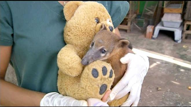 Número de animais resgatados nas estradas aumenta durante período de férias no Tocantins