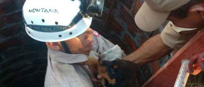 Filhote de cachorro é resgatado de poço com 10 metros de profundidade