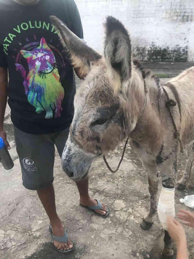 Animal foi encontrado com feridas abertas e patas quebradas no Bebedouro, em Maceió (Foto: Divulgação/Pata Voluntária)