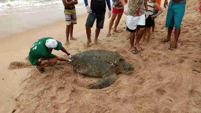 Tartaruga foi encontrada na areia da praia (Foto: Divulgação/Biota)