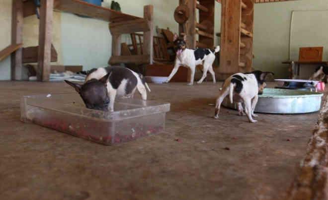 Cães retirados de casa abandonada são levados para antigo gatil