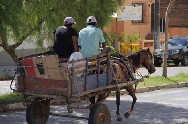 Câmara de João Pessoa (PB) discute regulamentação de 'carroças'