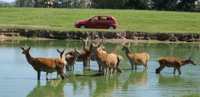 O contagio também atingiu outros animais do parque. (Foto: Pampas Safari/Divulgação)