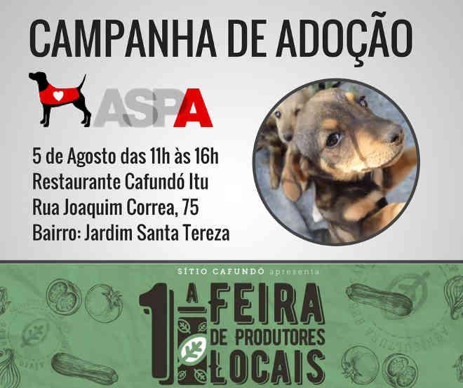 ONG ASPA Itu promove campanha de adoção neste sábado