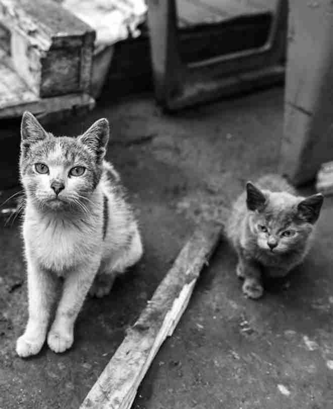ONG participa de Projeto de Lei para proibir dedetizadoras de capturar gatos em São Paulo, SP