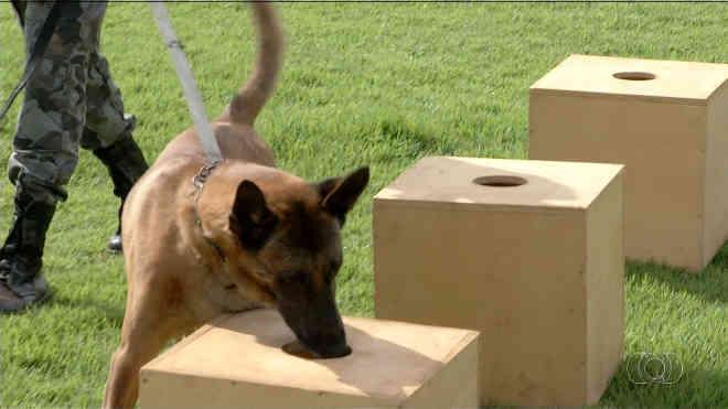 Animais são usados em operações de busca e também para procurar drogas. (Foto: Reprodução/TV Anhanguera)