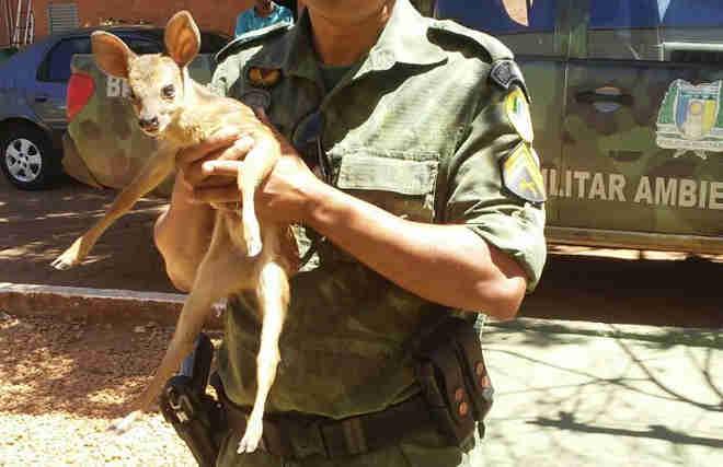 Veado foi resgatado pela polícia ambiental (Foto: PM Ambiental/Divulgação)