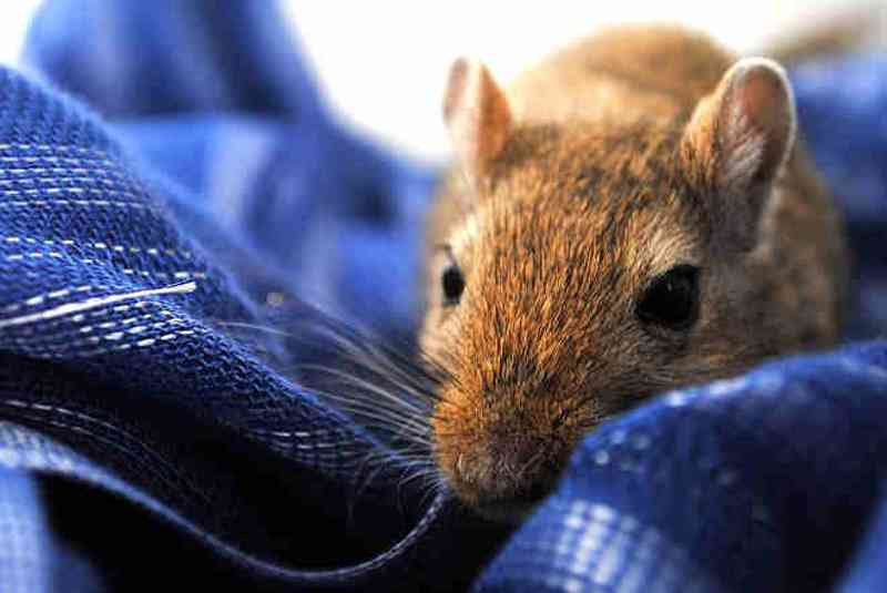E quem se importa com ratos?