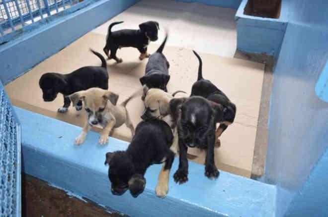 CCZ é autorizado a divulgar cadastro de animais e fotos na internet, para adoção. (Foto: Arquivo/ Campo Grande News)