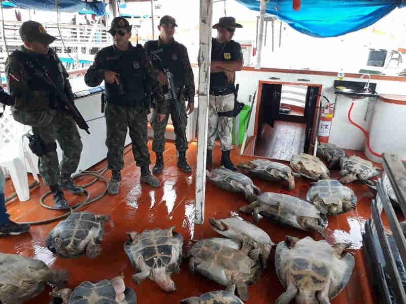 Animais foram levados para avaliação em um zoológico (Foto: Rafael Ferreira/TV Tapajós)