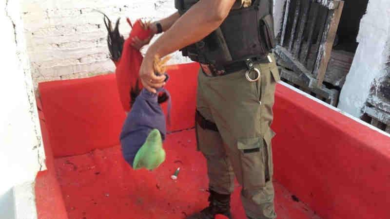 Quinze pessoas foram detidas durante 'rinha de galo' em Tacaratu, PE