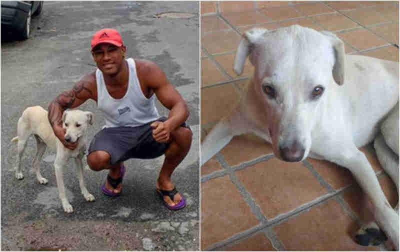 Após vídeo viralizar, homem adota cão que fez xixi em suas costas